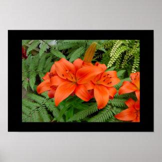 Lily flower - Iridescent orange (Matt 28-30) Posters