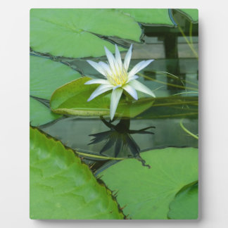Lily Flower Lotus in Bloom Plaques