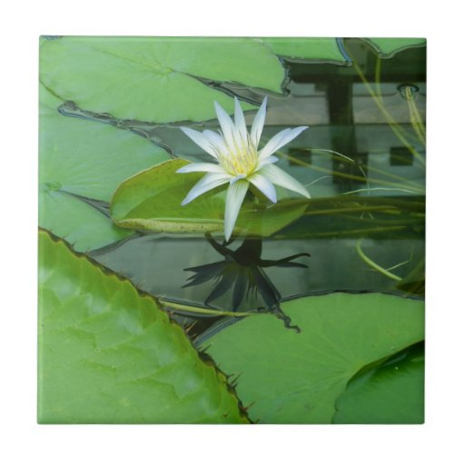 Lily Flower Lotus in Bloom Small Square Tile