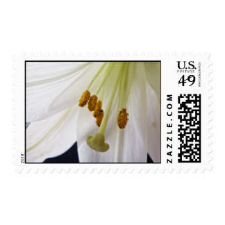 Lily Flower Macro postage stamps