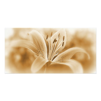 Lily Flower Sepia Toned Photocard Card