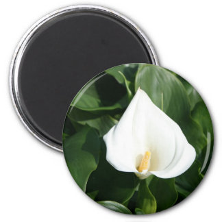 Lily growing at Calla Lily Plantation, Taiwan 2 Inch Round Magnet