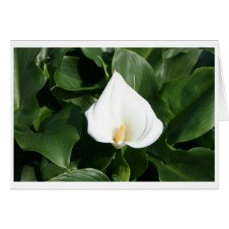 Lily growing at Calla Lily Plantation, Taiwan Greeting Card