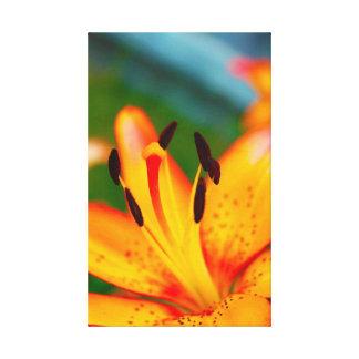 Lily II Canvas Print