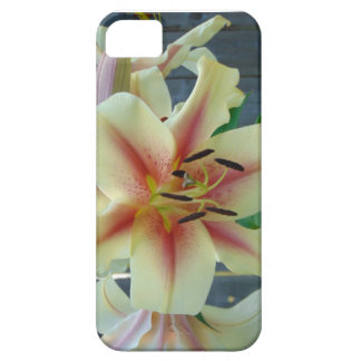 Lily in shades of cream, pink, chocolate iPhone 5 case
