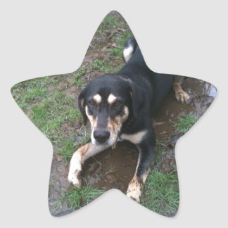 Lily in the mud! star sticker