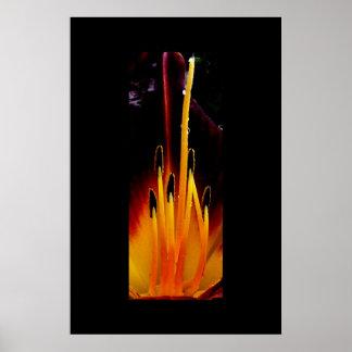 Lily (Interior) Print