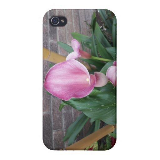 Lily Case For iPhone 4