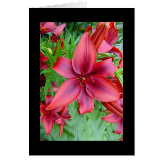 Lily - Iridescent Red (Luke 12:15) Greeting Card