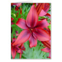 Lily - Iridescent Red (Luke 12:15) Greeting Cards
