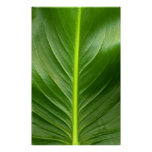 Lily Leaf Posters