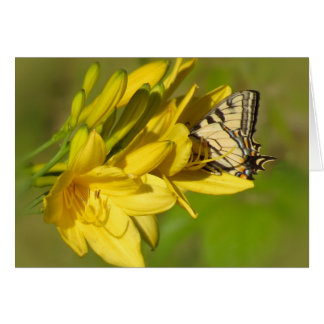 Lily Lover - Butterfly on Daylilies Card