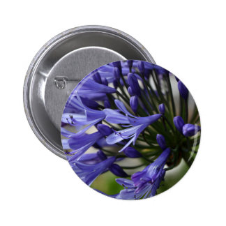 Lily of the Nile  (Agapanthus sp.) Pinback Button