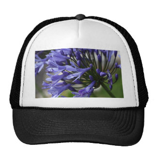 Lily of the Nile  (Agapanthus sp.) Trucker Hat