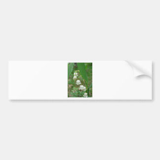 Lily-of-the-valley Bumper Stickers