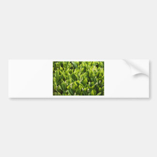 Lily of the Valley Flower Patch Bumper Sticker
