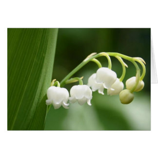 Lily of the Valley Note Cards