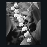 "Lily of the Valley Photo Print<br><div class=""desc"">8x10 photo of Lily of the Valley in black and white</div>"