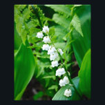 "Lily of the Valley Photo Print<br><div class=""desc"">16x20 photo featuring Lily of the Valley in color</div>"