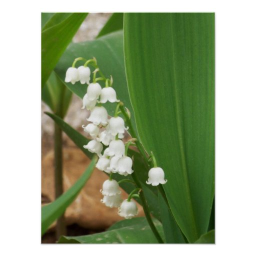 Lily of the Valley Posters
