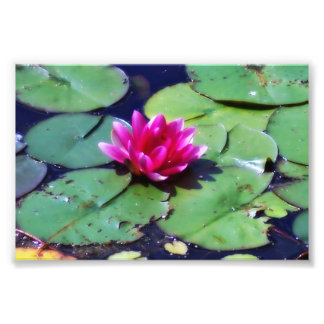 Lily on pond art photo