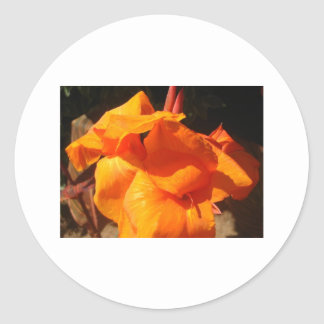 lily,orange canna lilly classic round sticker