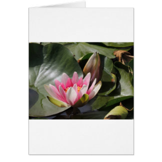 Lily Pad and Flower Card
