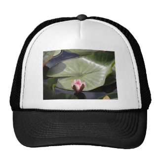 Lily Pad and Flower Mesh Hat