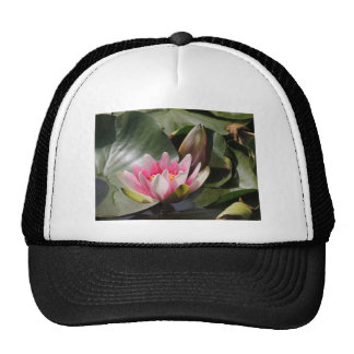 Lily Pad and Flower Trucker Hats