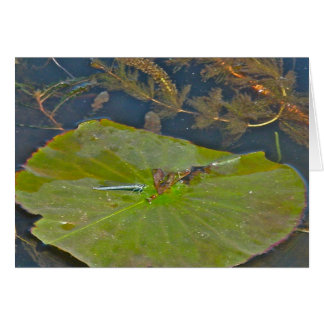 Lily Pad & Damselfly Note Card