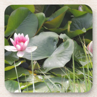 Lily Pad Drink Coaster