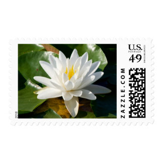 Lily Pad Flower Postage Stamps