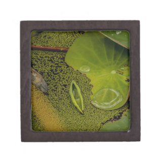 Lily pad jewelry box