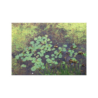 Lily Pad on Canvas