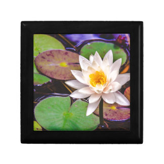 Lily pad on the water jewelry box