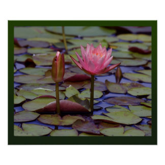Lily Pad Photo Prints -24x20-other sizes available Poster