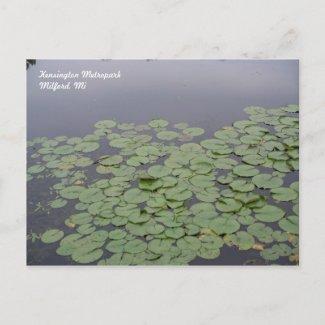 Lily Pad Postcard postcard
