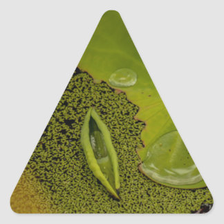 Lily pad triangle sticker