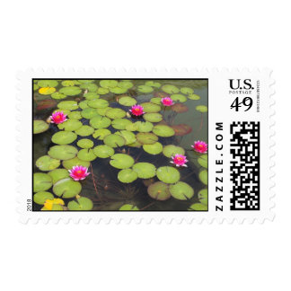 lily pad with pink flowers stamps