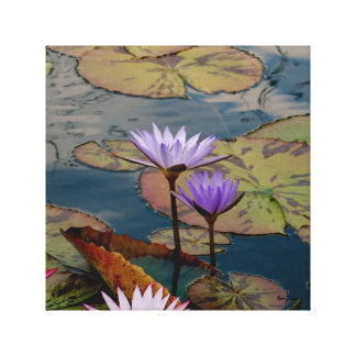 Lily Pad Wrapped Canvas