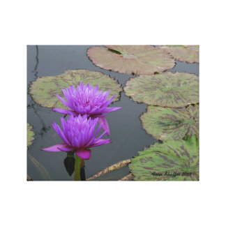 Lily Pad Wrapped Canvas II