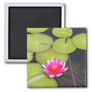 Lily Pads and Lotus Magnet
