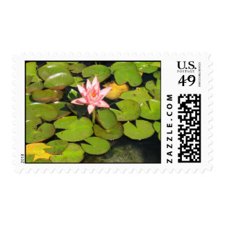 Lily Pads and Pink Flower Postage