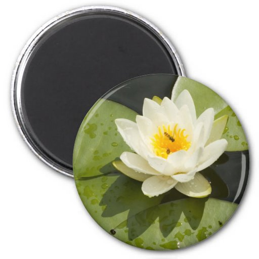 Lily Pads and White Lotus Flower 2 Inch Round Magnet