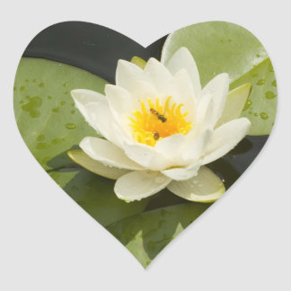 Lily Pads and White Lotus Flower Heart Sticker