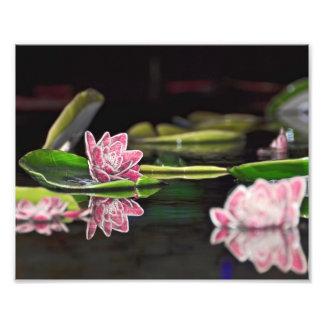 Lily Pads Art Photo