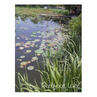 Lily Pads at Reelfoot Lake Postcard
