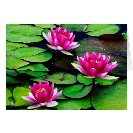 lily pads Blank Photo Greeting Cards