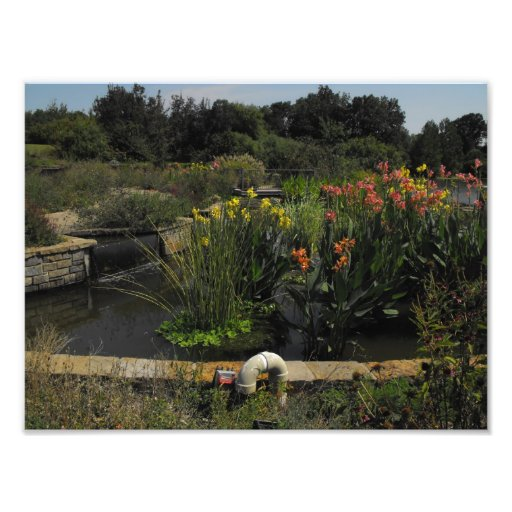 Lily Pads & Flowers Photo Print