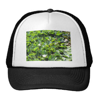 Lily Pads Mesh Hats